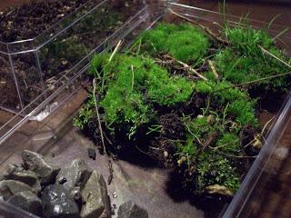 Jardin miniature - etape 0 - miniature