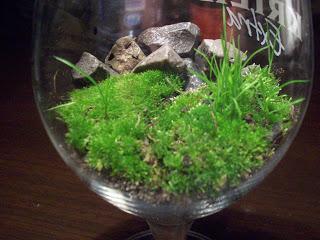 Jardin miniature - etape 2 - miniature